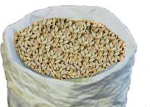 Peated malt- Brittish